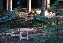Daneben stapeln sich die auf Länge geschnittenen Baumstämme.