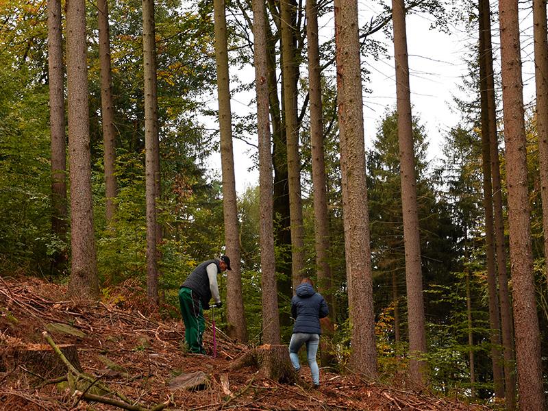 Ein Auto - ein neuer Baum #machenstattmeckern 0002
