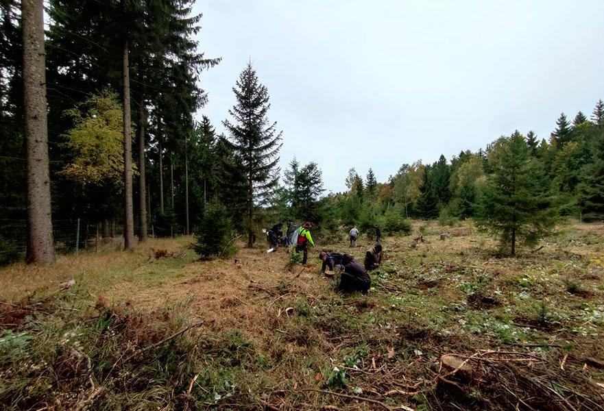 Ein Auto - ein neuer Baum #machenstattmeckern Wald