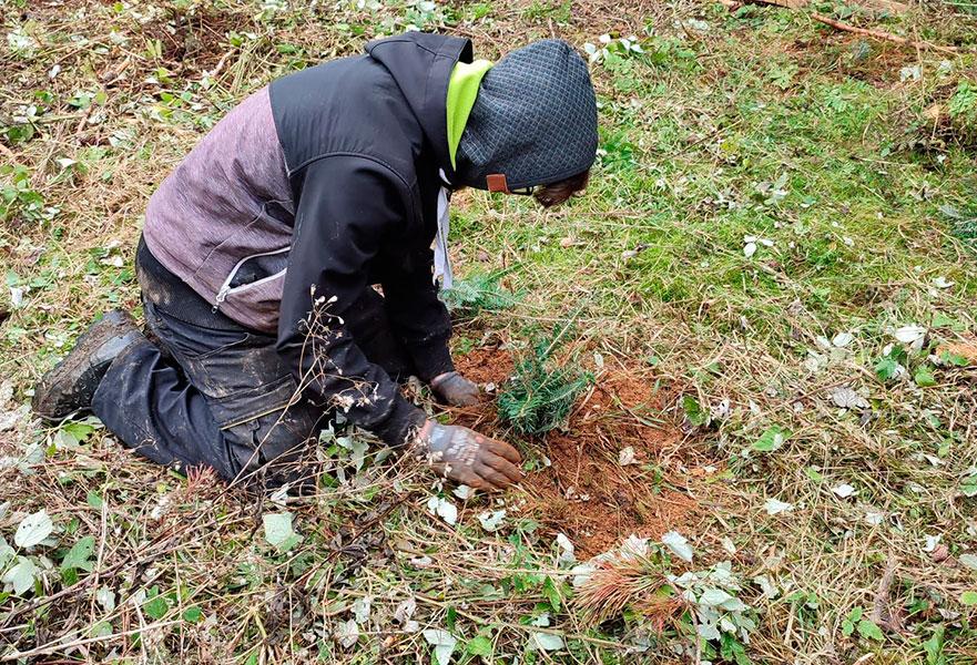 Ein Auto - ein neuer Baum #machenstattmeckern drin
