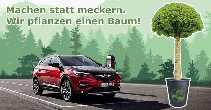 Wir pflanzen einen Baum für jedes 2020 in der ZIMPEL & FRANKE Gruppe verkaufte Auto.