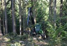Der Harvester - die Holzerntemaschine, die Bäume fällt, entastet, auf Länge schneidet und am Waldrand ablegt.