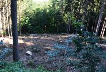 Wo vor kurzem noch ein scheinbar intakter Wald zu sehen war, liegt nun eine Lichtung mit unzähligen Baumstümpfen.